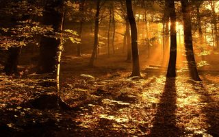 Sun-rays-in-the-woods